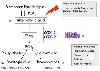 anti arachidonic acid diet