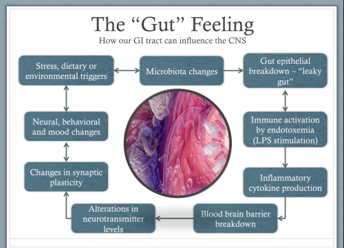 Gut Brain Connection >> The Gut Brain Connection The Vreeland Clinic S Blog