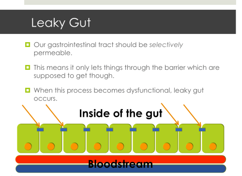 The gut forms an important barrier between what's inside the intestines and what gets absorbed. Those blue structures highlighted by the orange arrows are tight junctions. They hold the cells together do nothing can squeeze between them and pass into the local blood supply unchecked. This is a very important function.